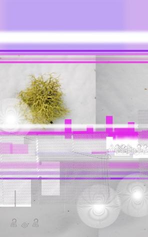 Wawona Moss #2